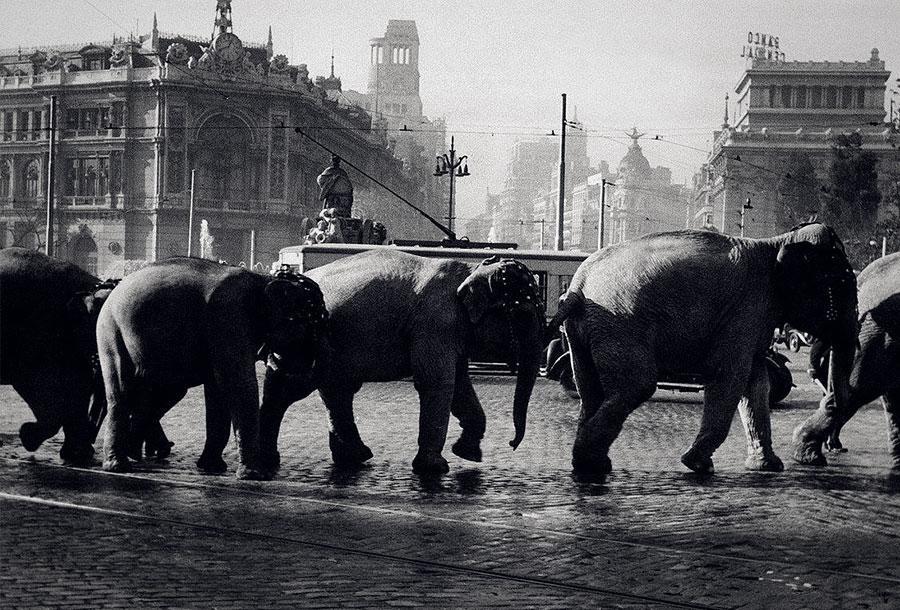 El Ayuntamiento de Madrid prohíbe los circos con animales